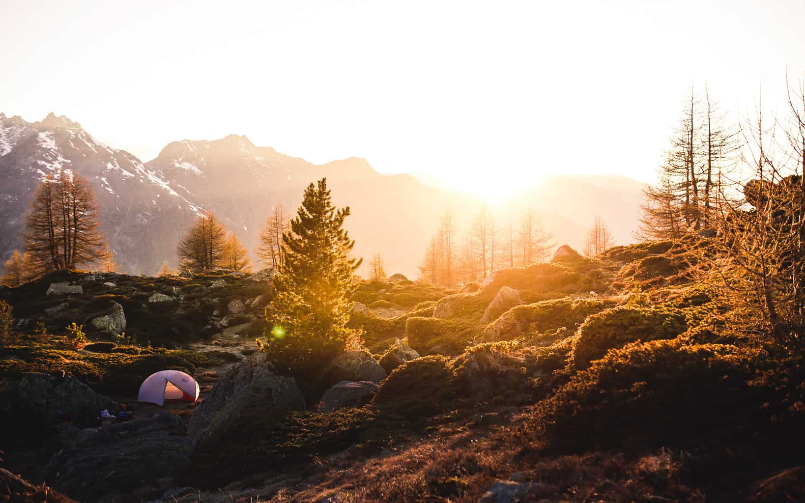 Sun rise in top of a hill with pine trees