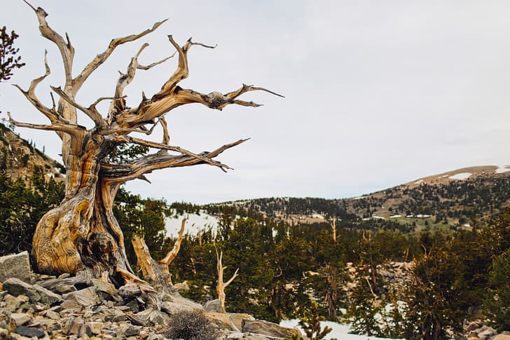 Activities at Great Basin National Park Tours for visitors