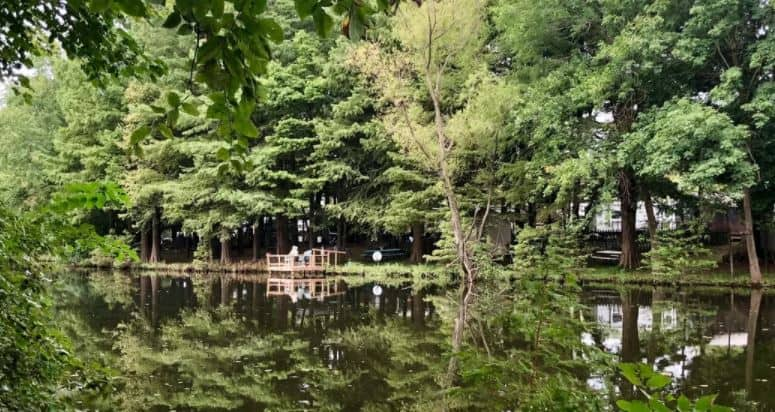 Why should you visit Carlyle Lake park