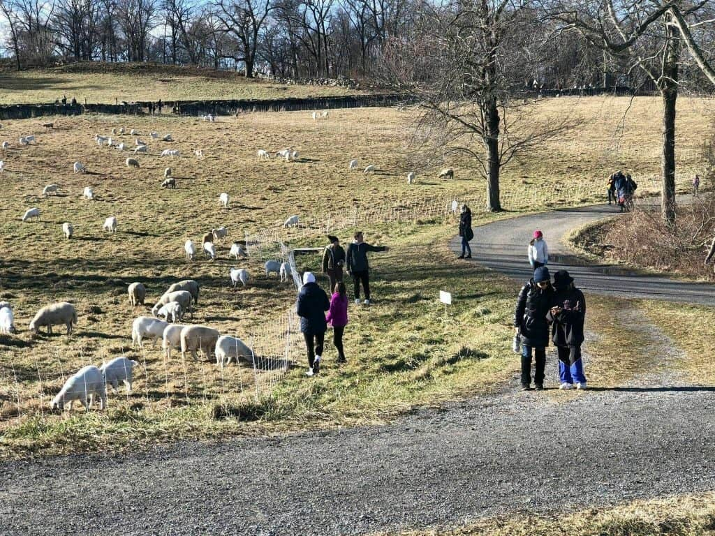 STONE BARNS FARM LOOP