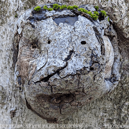 Toad Face Tree