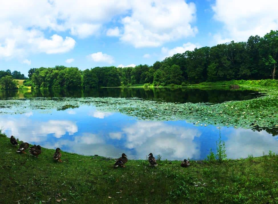 WHY YOU NEED TO VISIT ROCKEFELLER STATE PARK PRESERVE